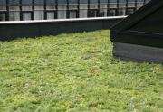 2 lags tagpap monteret med Nature Impact Roof system